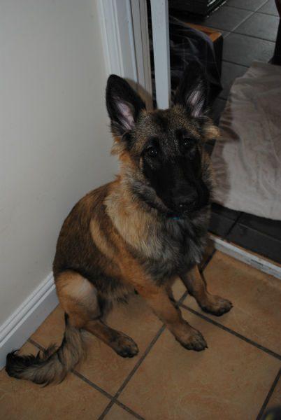 Bella Pup 011-w800-h600