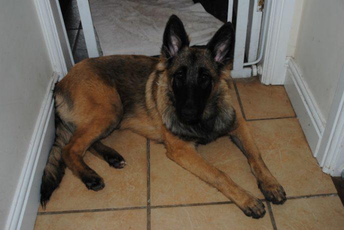 Bella Pup 012-w800-h600