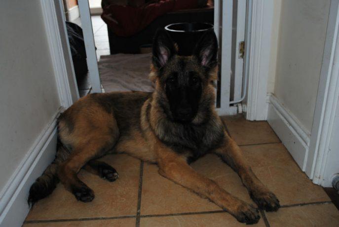 Bella Pup 013-w800-h600