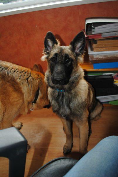Bella Pup 016-w800-h600