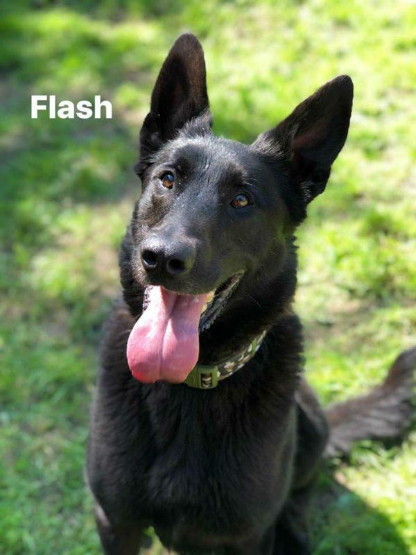 Flash 2020 HS-w1000-h800