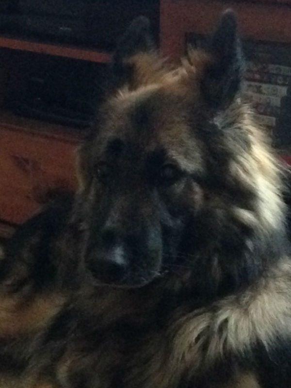 Roxie (14)