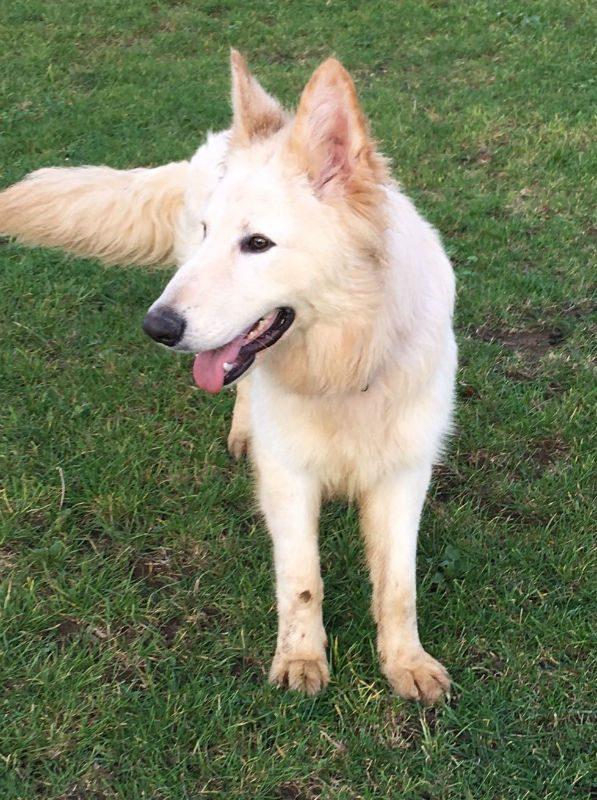 Wolfie (4)