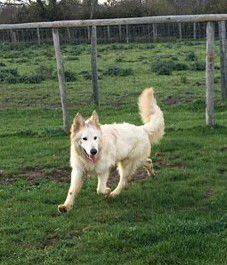 Wolfie (6)