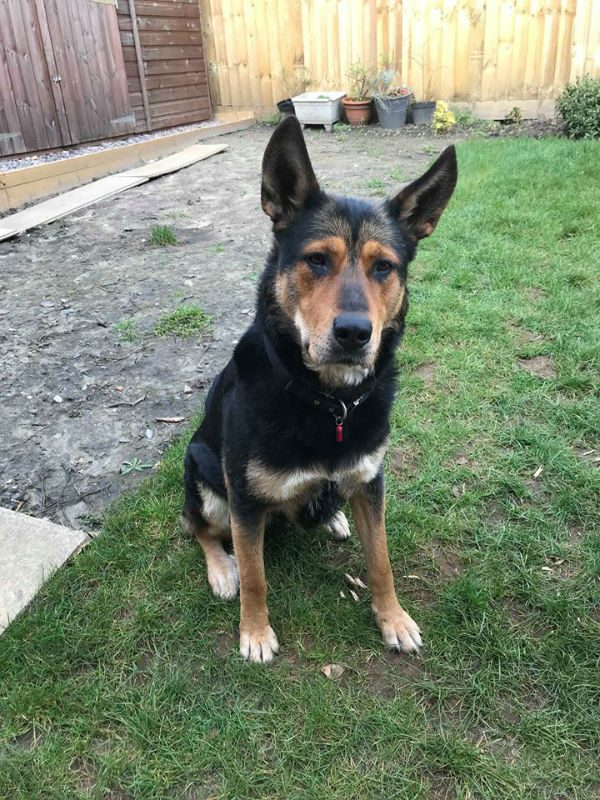 Bella (5)