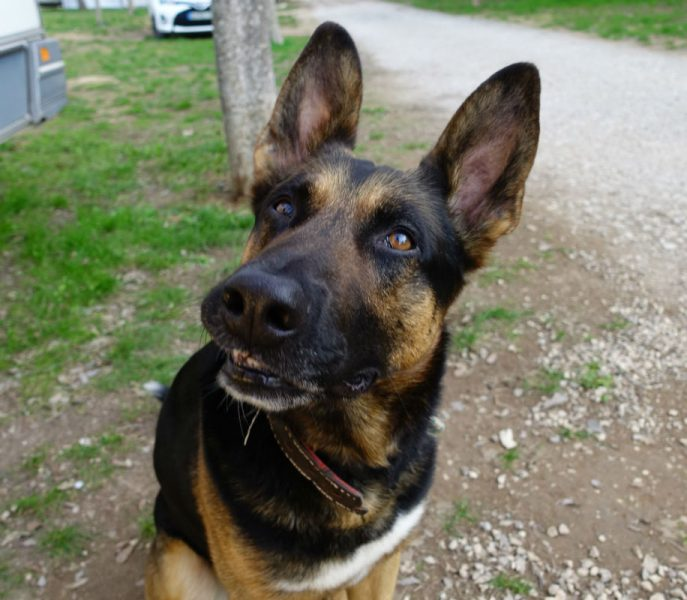 Doggo (10)