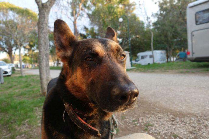 Doggo (12)
