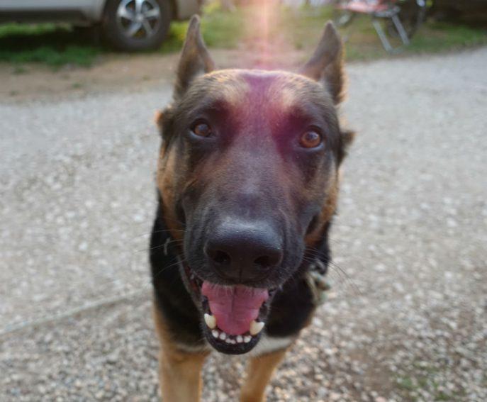 Doggo (13)