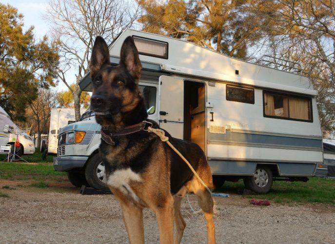 Doggo (14)