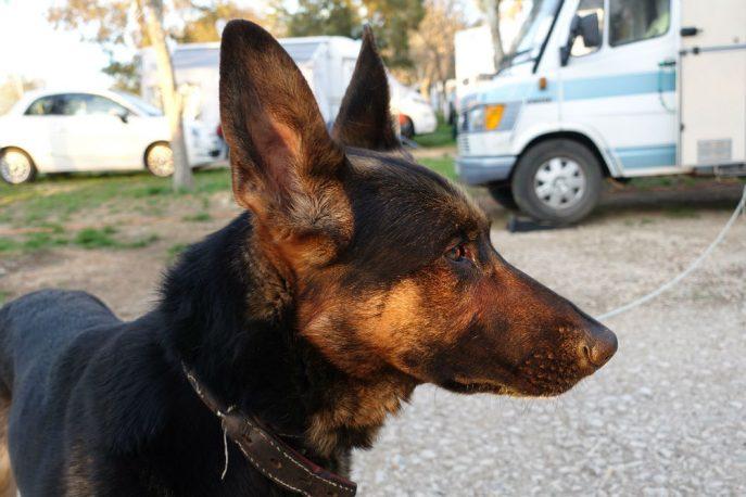 Doggo (15)