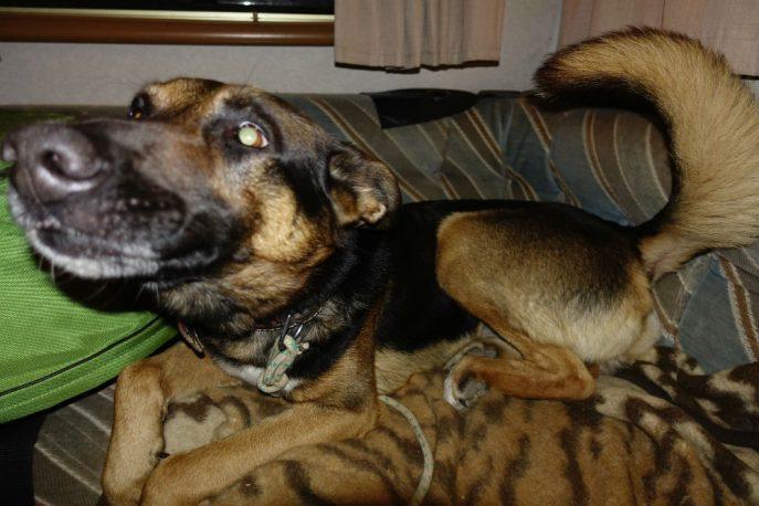Doggo (16)
