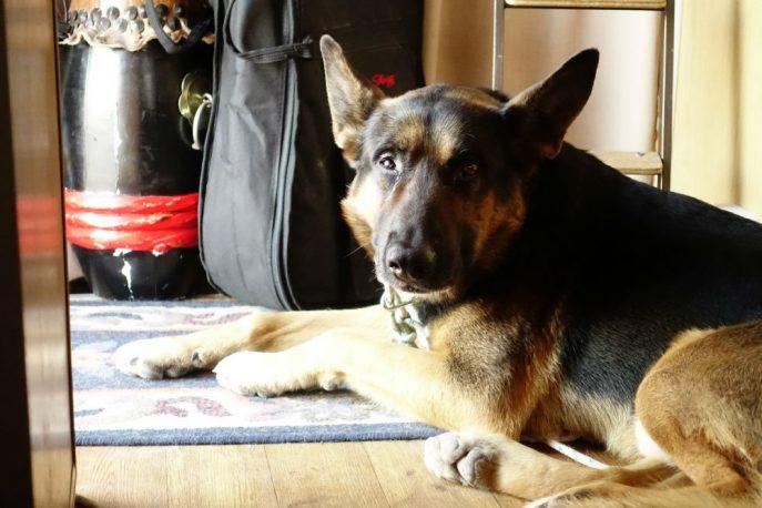 Doggo (17)