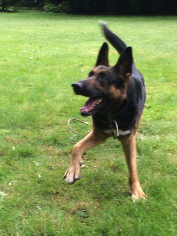 Doggo (3)-w1000-h800