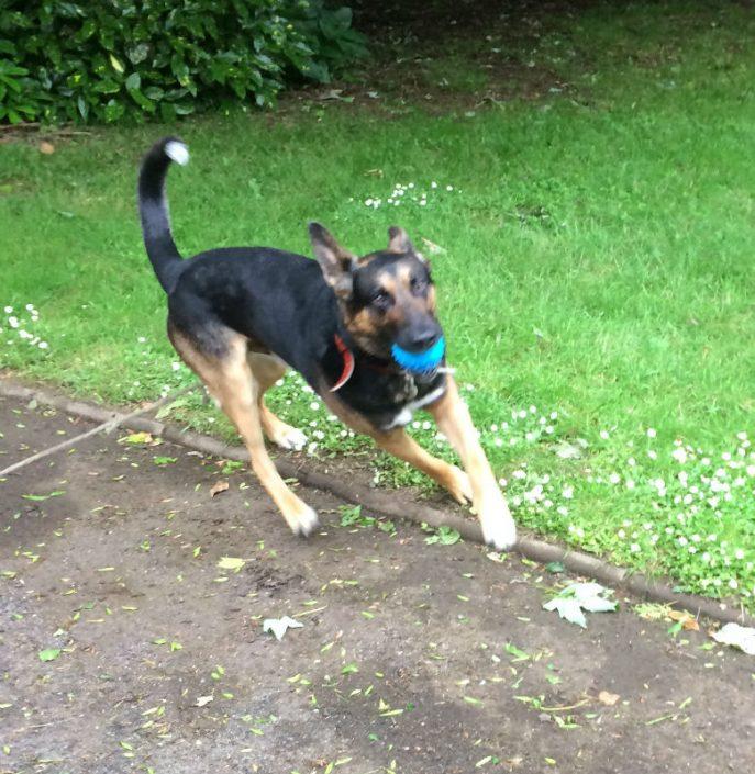 Doggo (4)-w1000-h800