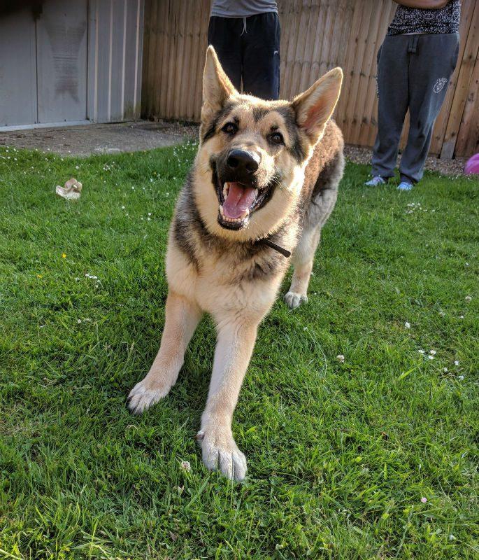Roxy (4)