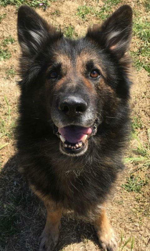 Rudi (2)
