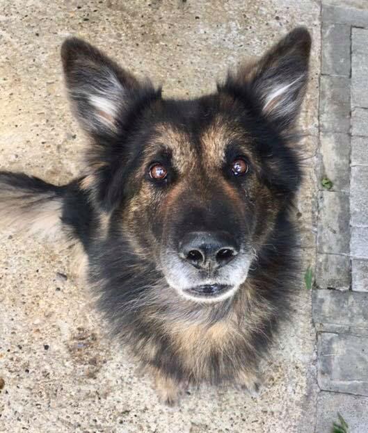 Rudi (3)