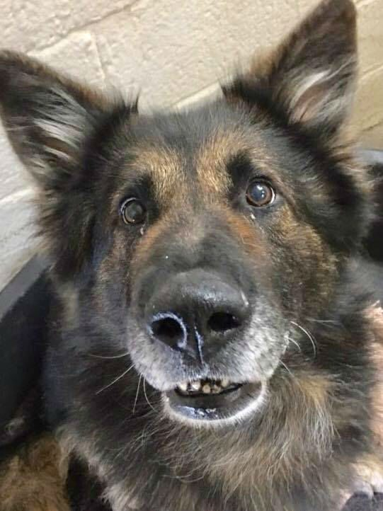 Rudi (4)