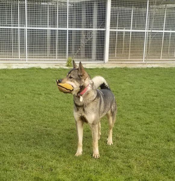 Zeus 14_result