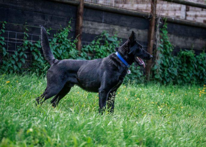 Baxter (10)