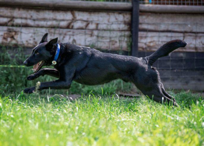 Baxter (11)