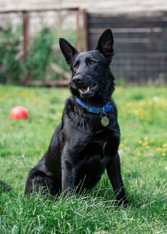 Baxter (13)