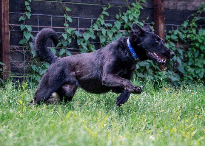 Baxter (15)