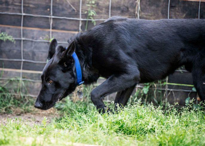 Baxter (9)
