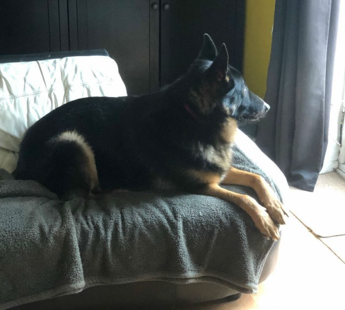 Max (5)