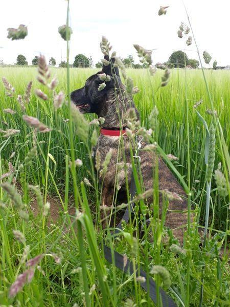 Tilly (8)