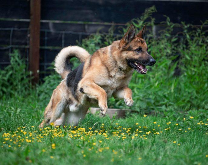 Max (2)