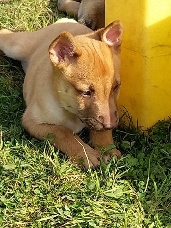 Puppy 1- Finn (3)