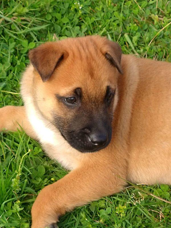 Puppy 2 - Red (2)