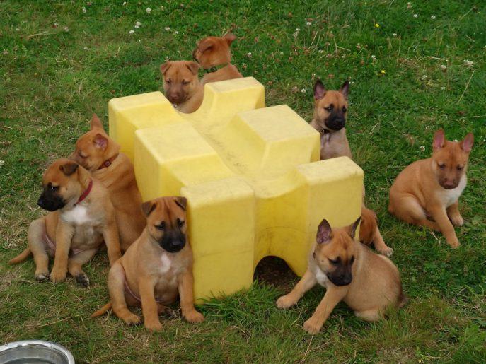 Puppy 4 - Flo (1)
