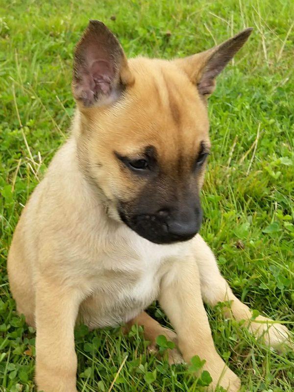 Puppy 4 - Flo (2)