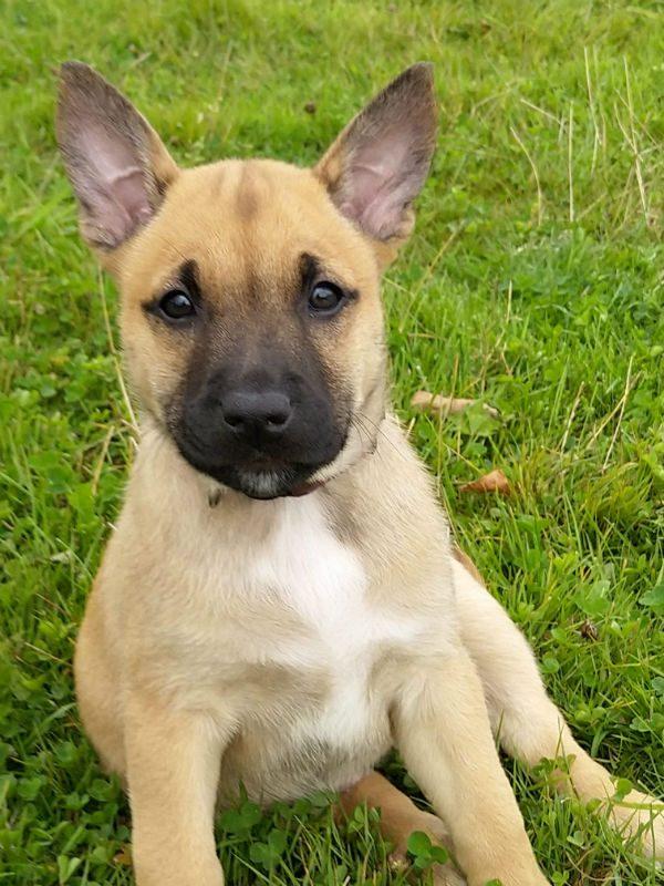Puppy 4 - Flo (3)