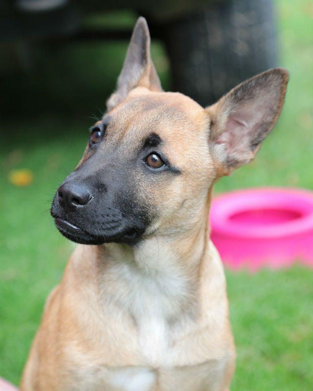 Puppy 4 - Flo (4)