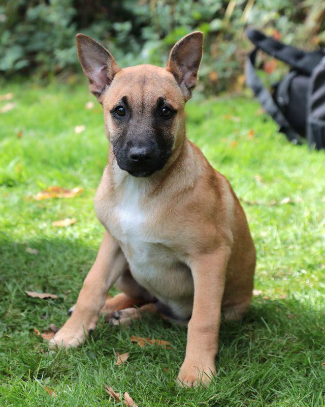 Puppy 4 - Flo (7)