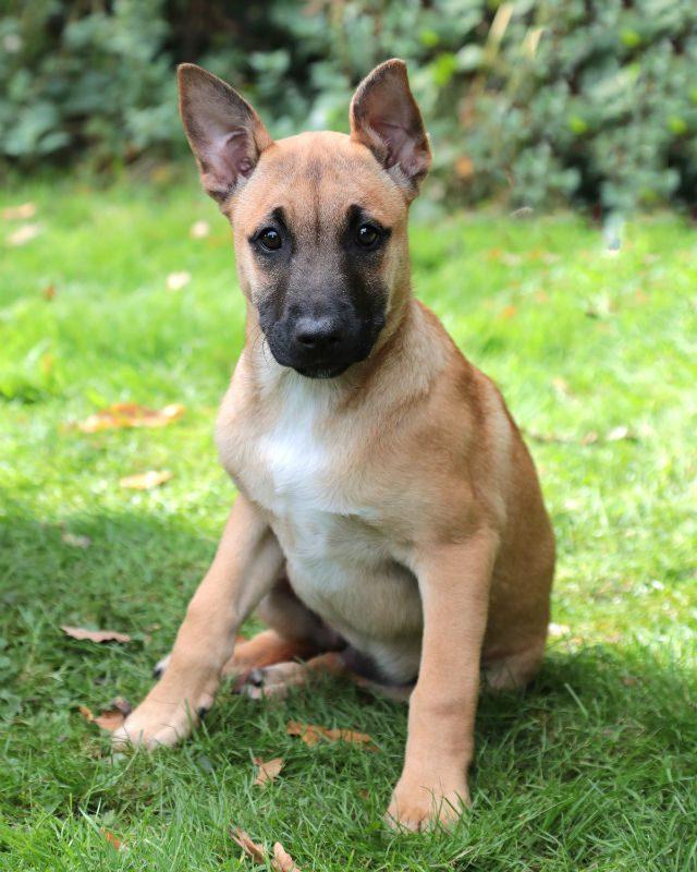 Puppy 4 - Flo (8)