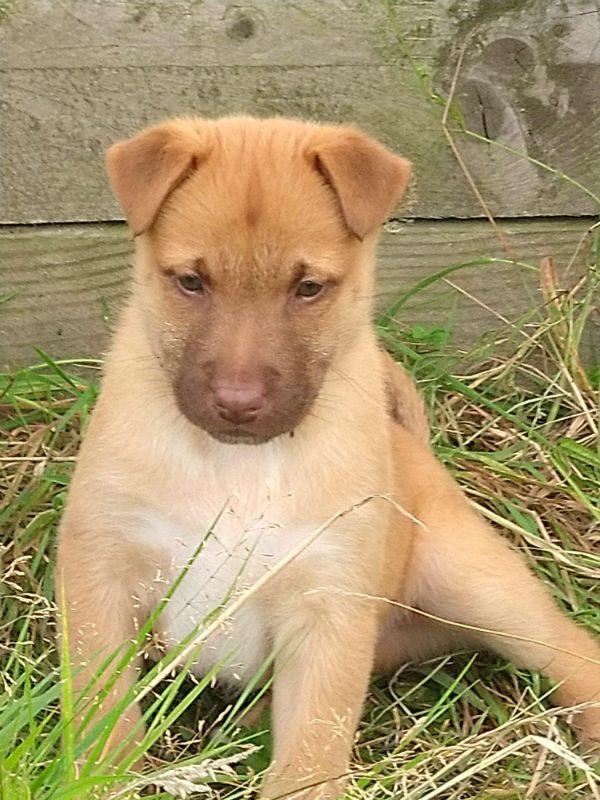 Puppy 7 - Chunky (3)
