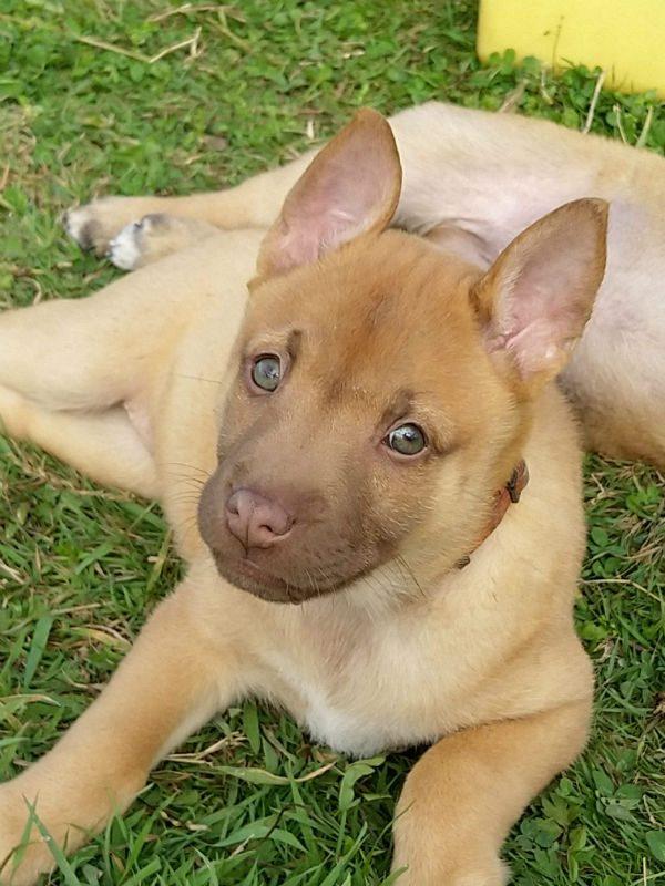 Puppy 9 - Tosca (2)