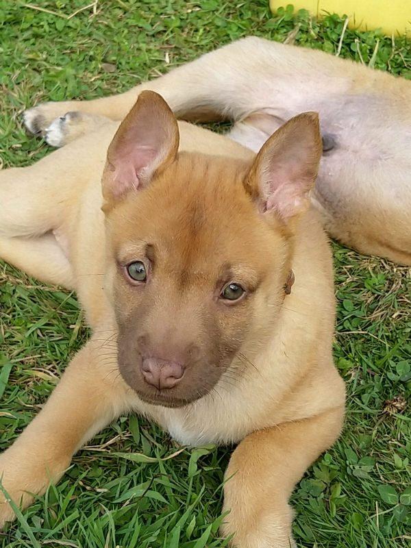 Puppy 9 - Tosca (3)