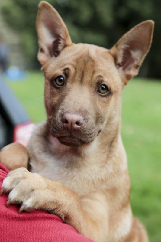 Puppy 9 - Tosca (4)