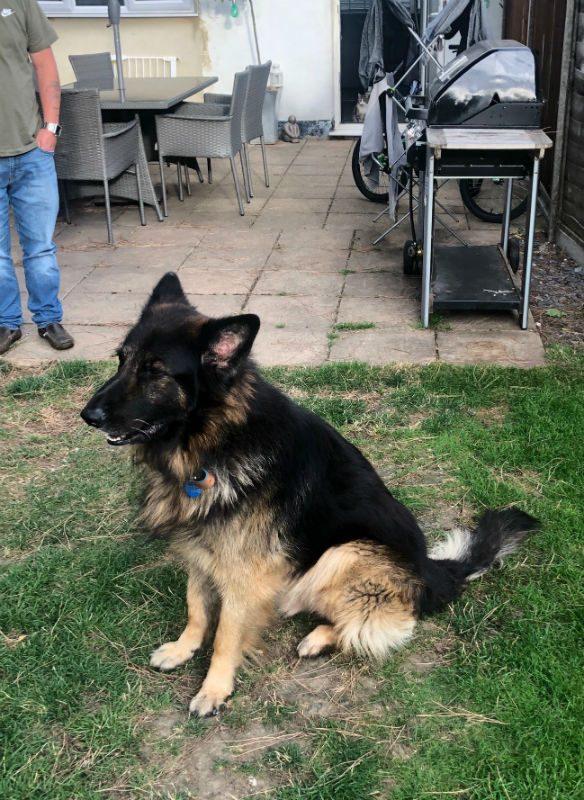 Zeus (4)