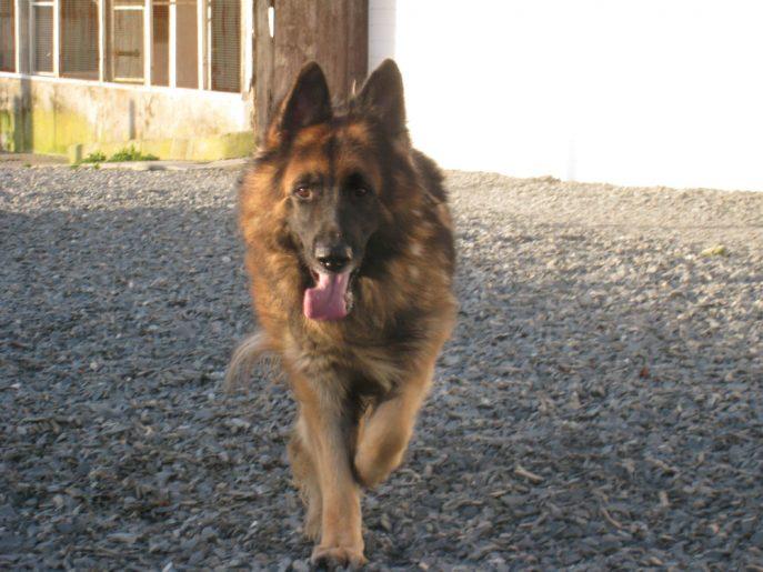 Monty (3)