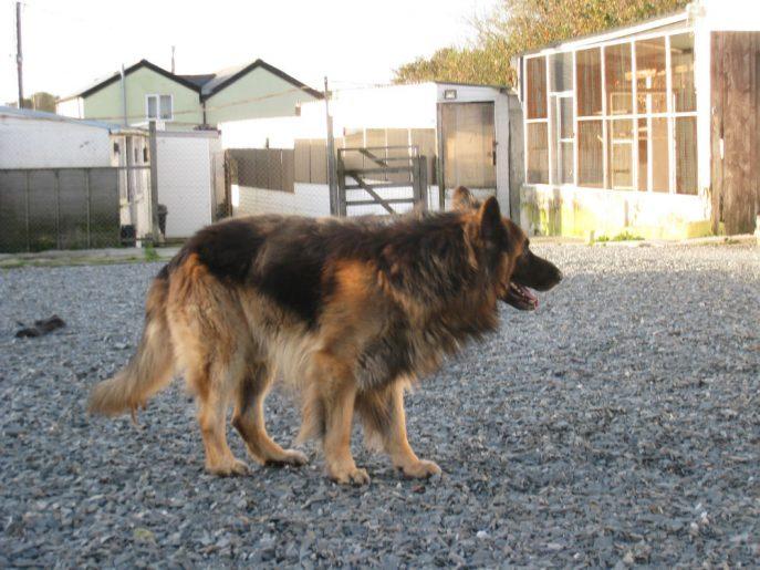 Monty (4)