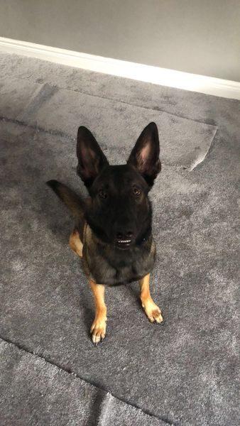 Bailey pup 2_result