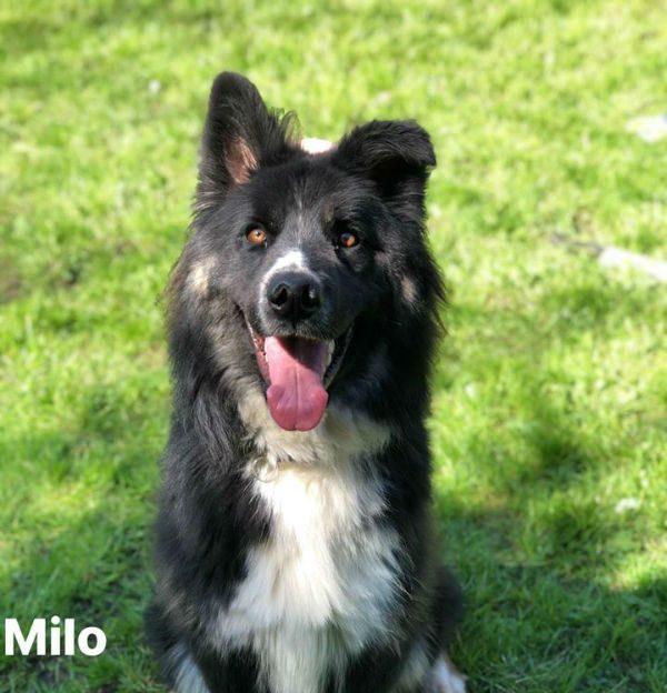 Milo 2020 HS-w1000-h800