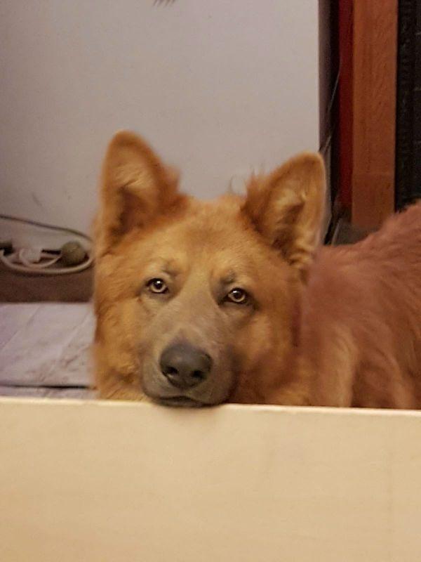 Bailey (2)