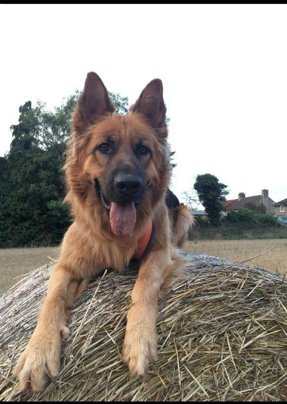 Jasper (1)